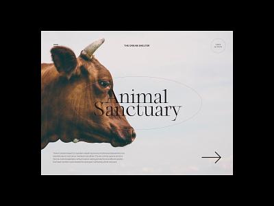 Animal Sanctuary design simple minimalist webdesign web website ui