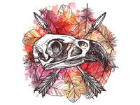 Eagle Skull. Nature Morte
