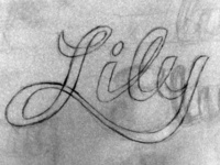 Lily hand lettering