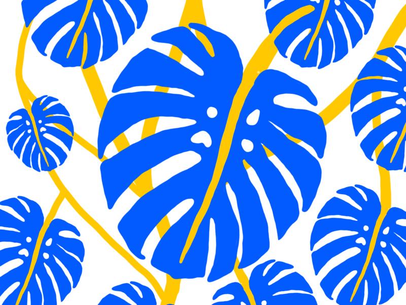 Monstera II motion animation illustrator design color illustration plant illustration monstera plant