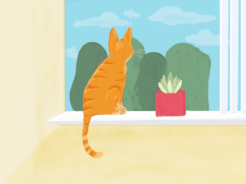 Cat in Window kitten illustration succulent cat window procreate art procreate orange cat tabby cat