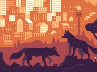 Teaser Crop: Coyotes