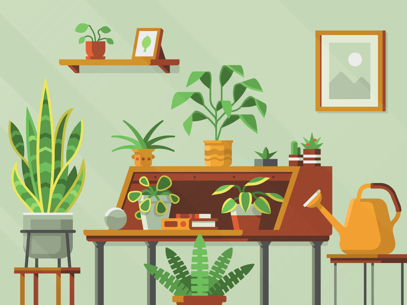 Houseplants – Spread Privacy: Donations snake plant relaxing cactus leaf fern succulent book desk watering can houseplants plants