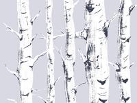 Birch study 1 sm