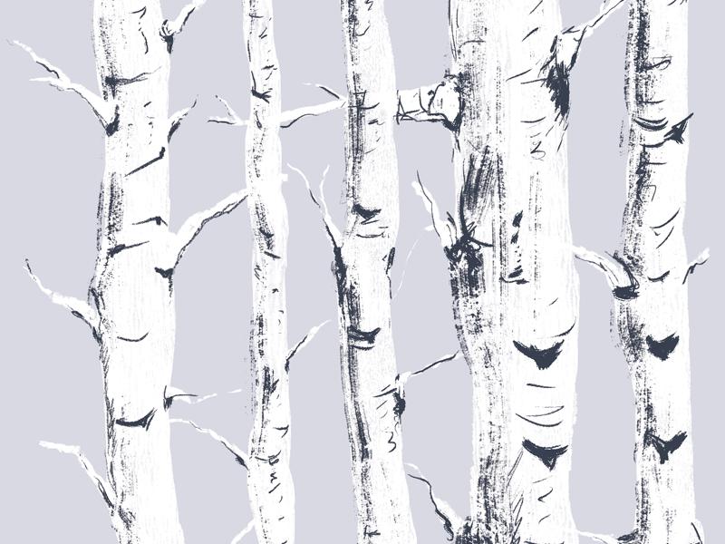 Study of Birch Trees texture birch pattern illustration trees