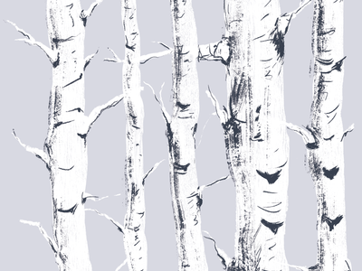 Study of Birch Trees