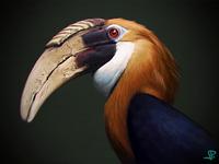 Hornbill study