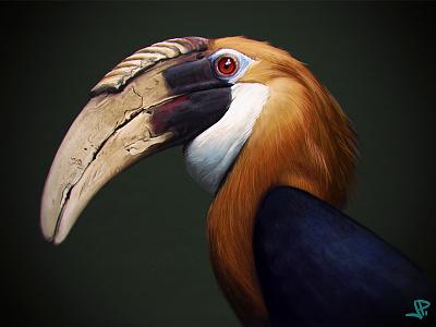 Hornbill study biological illustration painting hornbill photoshop