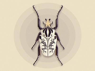 Vector Beetle beetle texture vector illustration