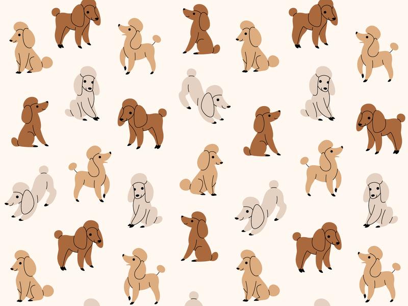 Pattern with poodle cartoon animal animal character character illustration vector flatdesign pattern kennel pet cartoon art animal cartoon dog domestic dog