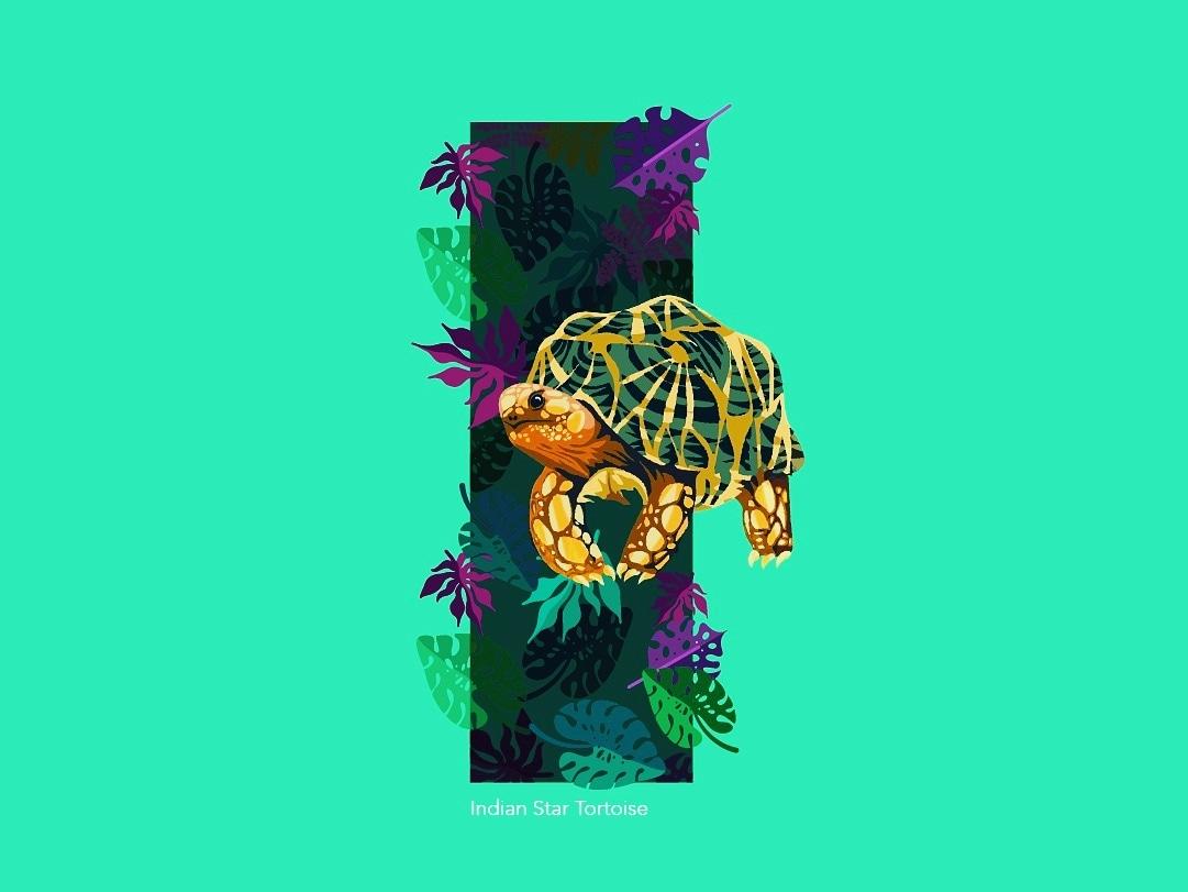 36Days of Type - I startortoise 36daysoftype design conservation animal-illustration lettering illustration typography