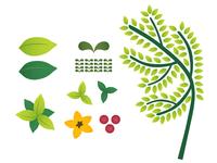 Nature Illustration Studies