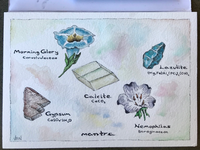 Flowers and Minerals