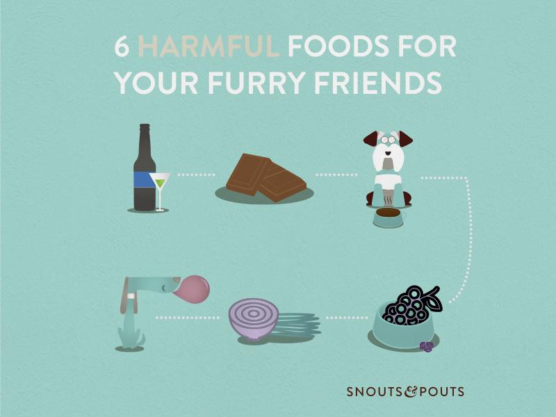 Snouts food