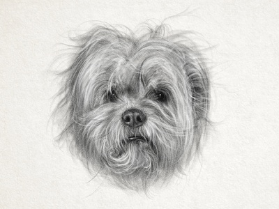 Hot Mess drawing hairstyle digital adobe fresco crazy messy puppy hair dogs