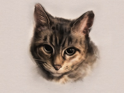 Kit the Cat feline kitty cat adobefresco procreate
