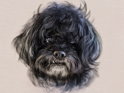 Portrait of Cooper portrait tooth hair pet dog drawing adobefresco