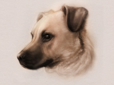 Portrait of Drogo procreate pets portrait dog