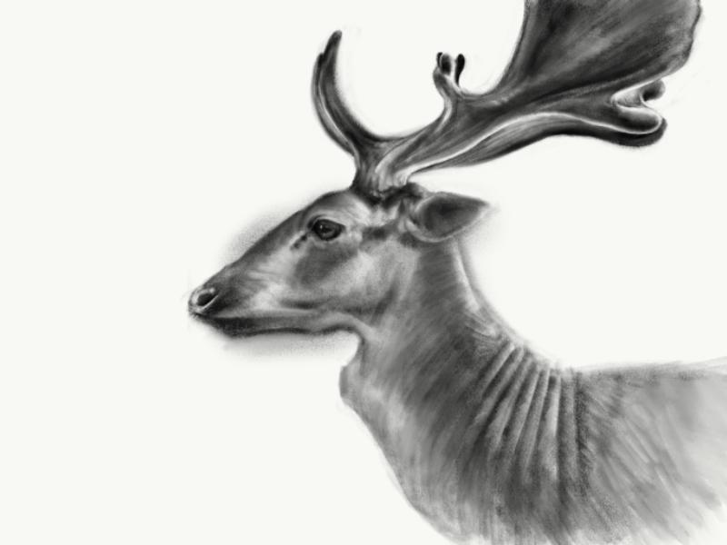 Fallow Deer nature animal animals antlers procreate wildlife deer