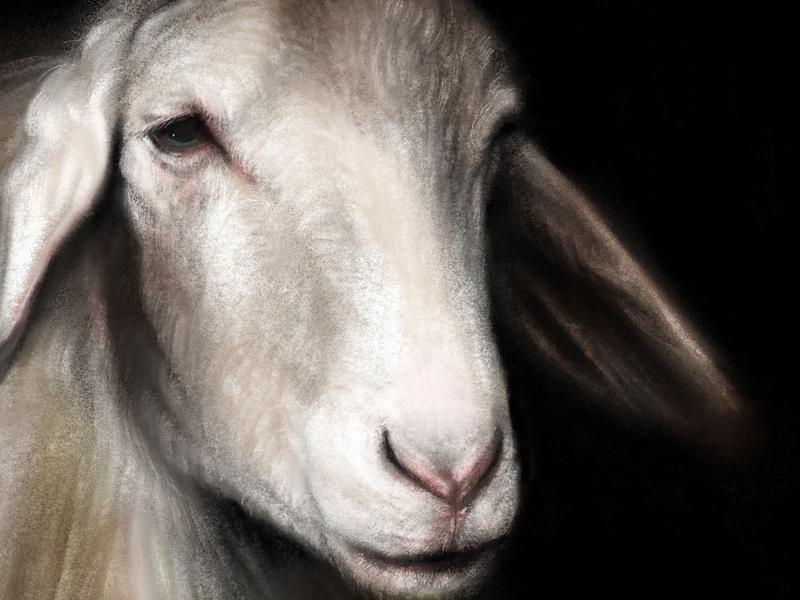 Sheep Portrait wool pink ears nose eye digital painting lamb procreate sheep