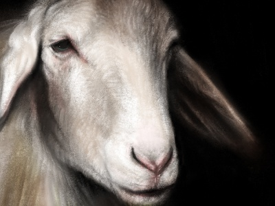 Sheep Portrait wool pink ears nose eye digital painting lamb procreate sheep