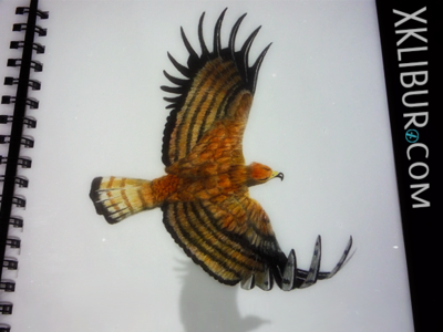 Eagle water colour water colors pencil drawing watercolor water color eagle