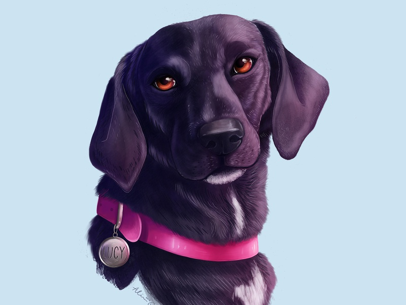 Lucy illustration animal pet dog portrait