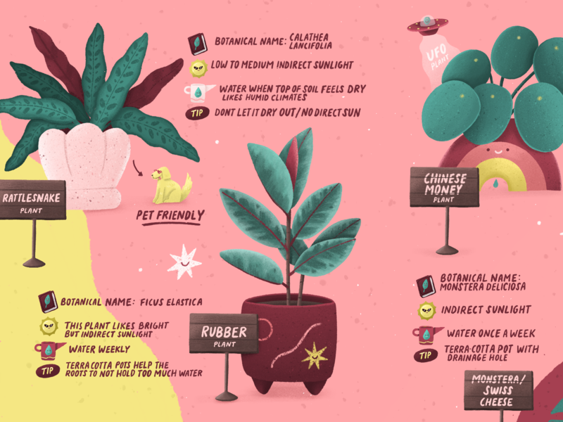 PLANT GUIDE plant care editorial editorial illustration plant plant illustration illustration