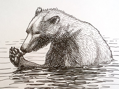 The bear kamchatka drawing sketch graphic ink