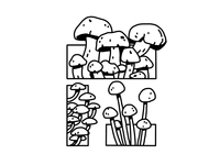 Fungus/Shrooms