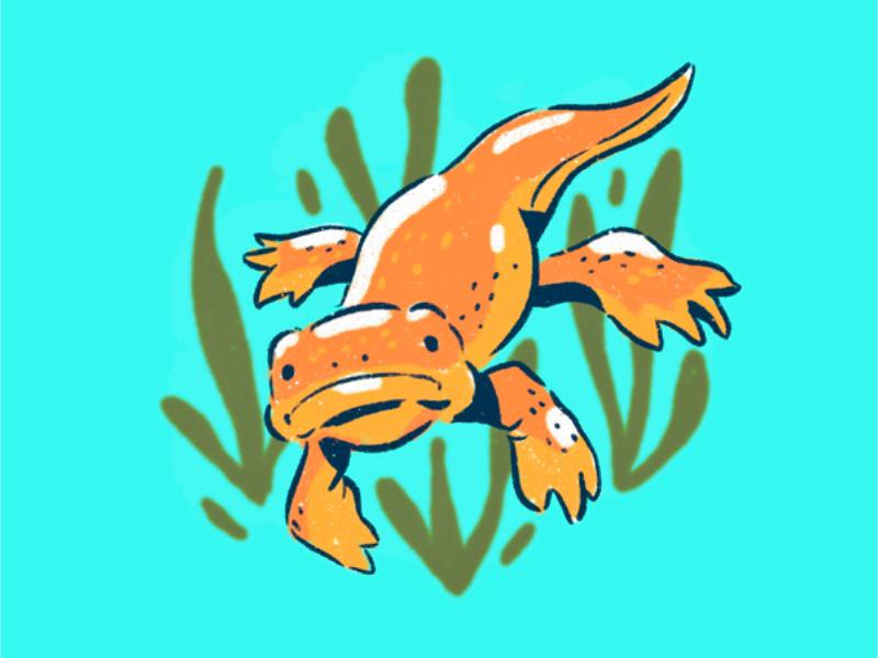 Newt illustration procreate cute reptile newt