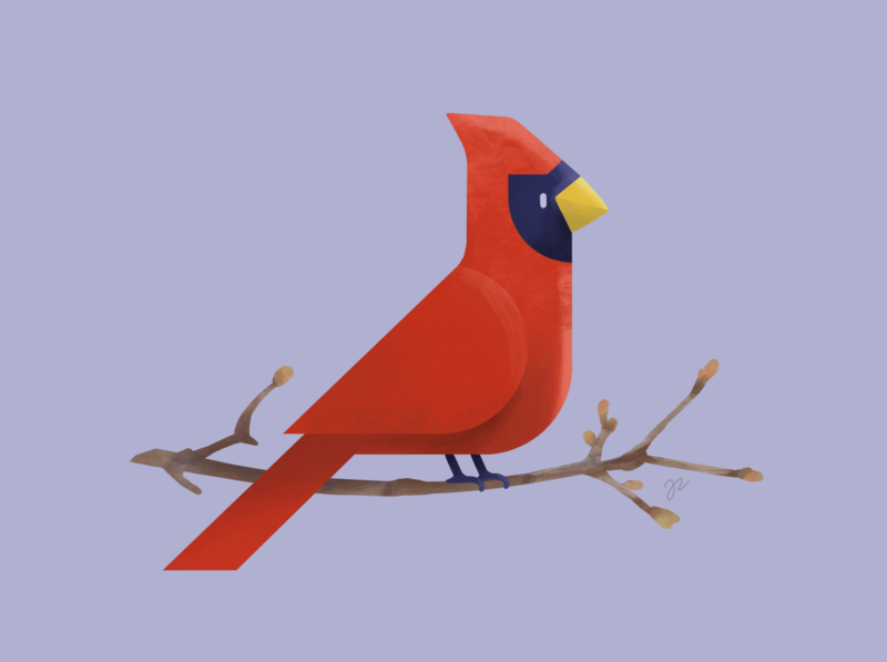 Cardinal procreate spring bird cardinal