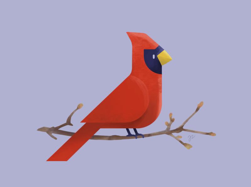 Cardinal procreate spring bird cardinal