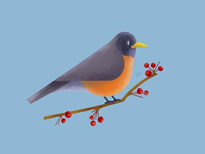 Robin bird illustration procreate spring bird robin