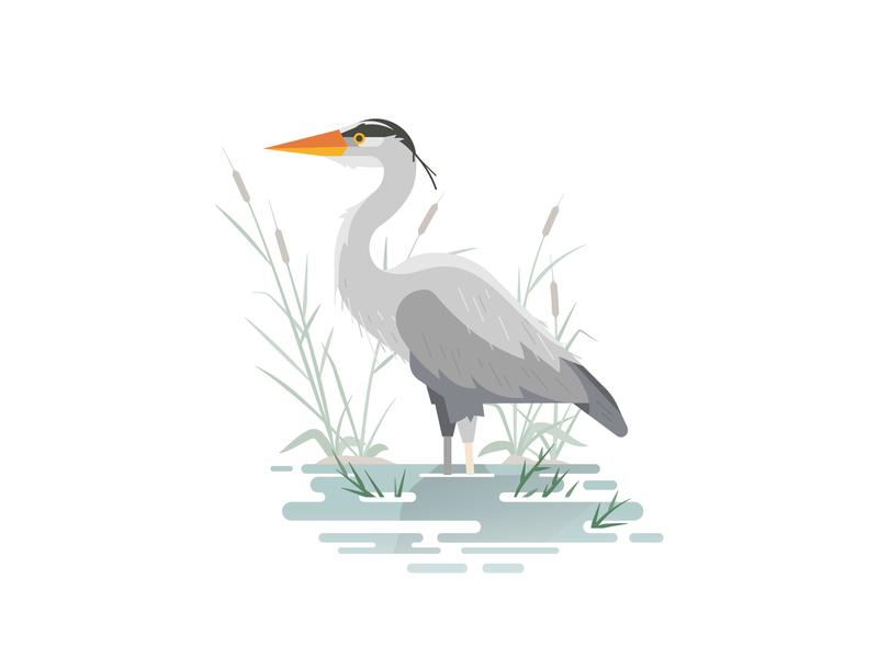 Blue Heron lake bird bird illustration bird blue heron