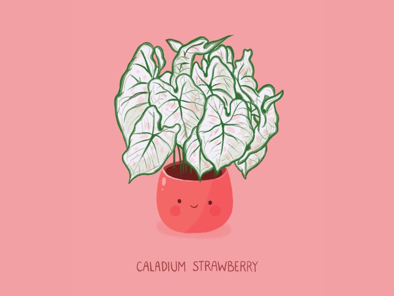 Caladium Strawberry urban jungle urban jungle houseplant plant illustration greenplant leaf character characterdesign design pink cute strawberry caladium procreateapp procreate doodle illustration plants plant