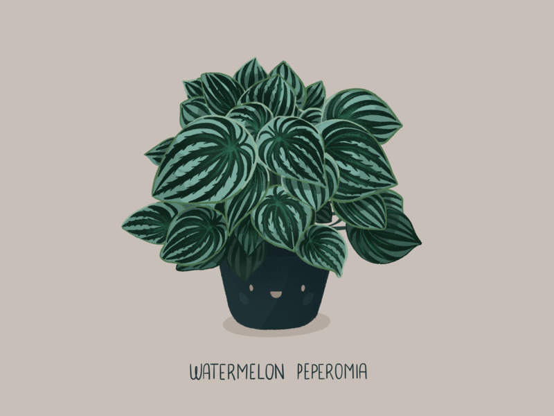 Watermelon Peperomia cute plant cute watermelon leaf graphicdesign green plant house plant peperomia plants plant graphic design graphic design digitalart procreateapp procreate doodle illustration