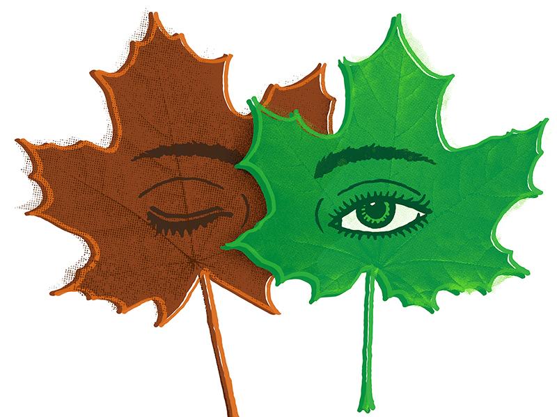 A new Leaf leaf illustration