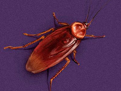 cockroach aracnophobia phobia hiperrealism scientific illustration realism insect arachnidea arthropodos spider