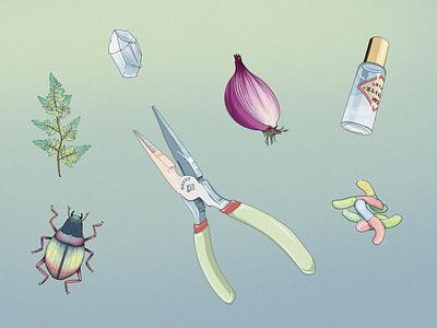 Gather onion fern minimalist line art beetle objects sketch drawing illustration