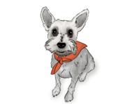 Maggie procreate schnauzer illustration