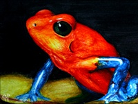 "Costa Rican ""Blue Jean"" Frog"
