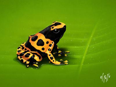 Yellow-banded poison dart frog digital painting cute wacom venezuela amphibian leaf photoshop frog nature