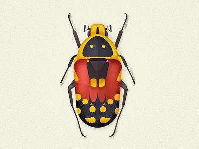 Flower beetle coleoptera insectagram insect bug flowerbeetle beetle illustration