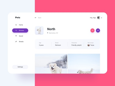 Daily UI 006 North's Profile product design ui challenge dailyui005 dailyui socialnetwork social sn photos application app profile page webapp profile