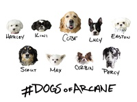 Dogs Of Arcane