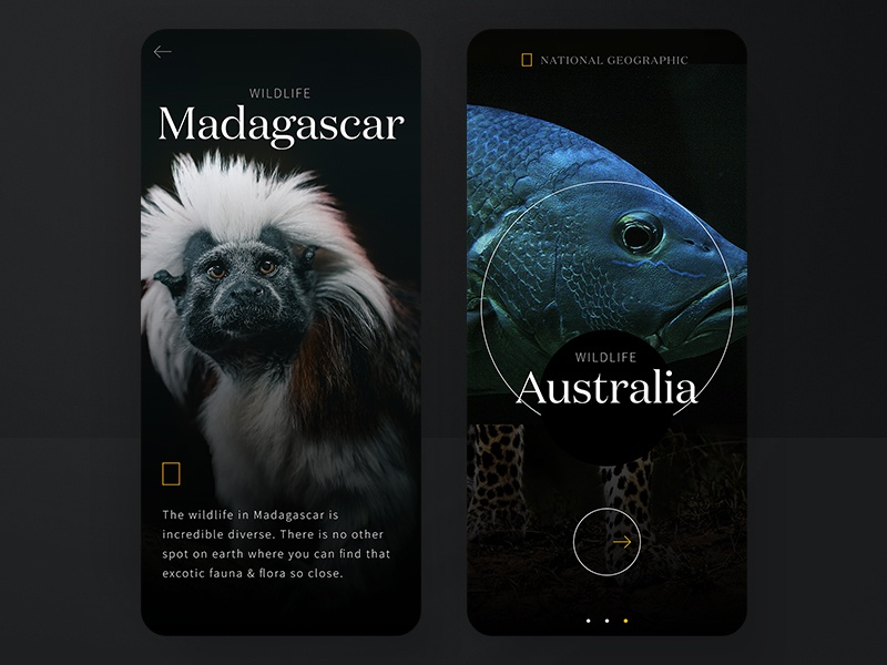#1 Wildlife on a glimpse | National Geographic mobile concept 🐆 animals branding cologne national geographic learning education ape fish mobile typography dark moody wildlife