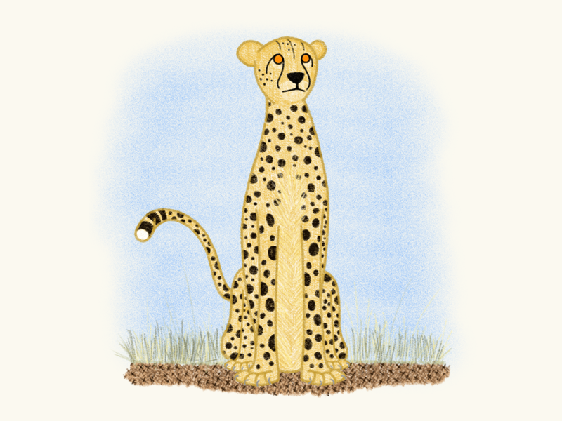 The Fast & The Furryous cheetah fast furryous cat spots africa procreate