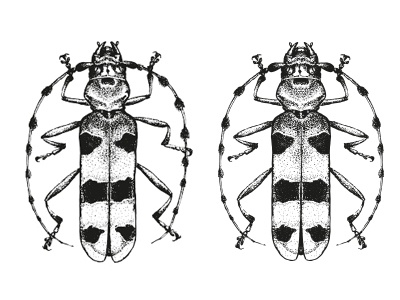 hand drawn things - bug pencil drawing insect hand drawn handdrawn dotwork bug black and white