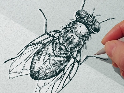 Dotwork Insects illustration tattoo ink fly insect blackwork dotwork